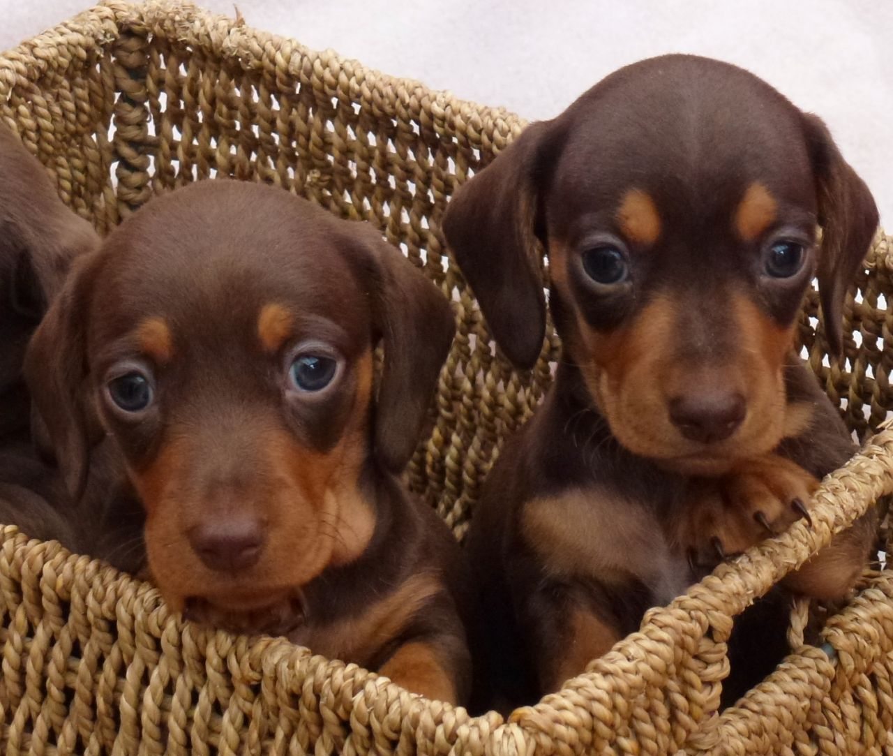 I dream of puppies… Pictures Of Puppies